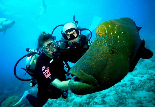 Дайвинг - профессиональный подводный спорт. Сумка для дайвинга и подводной охоты