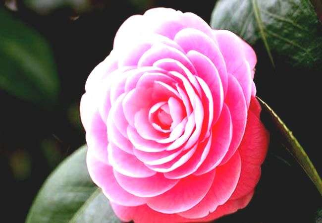 Заказ и доставка цветов Алматы в интернет-магазине «H.Bonnar»
